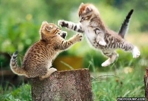 flying cat fight a cautionary blogging tale (Intro)